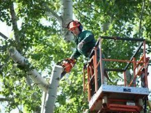 Договор На Услуги Спецтехники Для Спила Деревья Косгу 2020