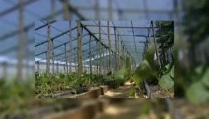 Субсидия на теплицу краснодарский край 2020